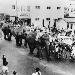 Fast gfrowing suburb- Elephants on street