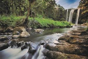 Exotic experience-Whangarei Waterfall, photo credit Aaron Radford