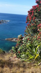 For Web-Out and About in New Zealand- Hauraki Gulf-Tiritiri Matangi