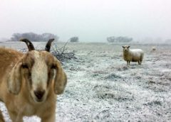 Heavy snow closes roads a temperatures freeze